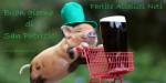 Piggy è il nostro barman preferito